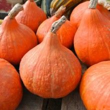 winter_squash_potimarron